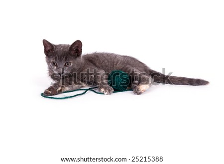 A gray kitten relaxes next to a ball of green yarn