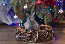 A gray rabbit sits a Christmas basket.Christmas decorations.