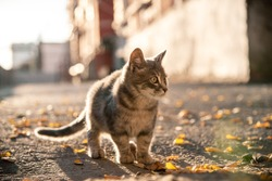 a gray stray cat is watching the street under the sunlight. abandoned homeless cat. pet on the street