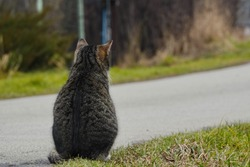 A gray striped cat sits back to the camera on the edge of the road and looks into the distance. Hitchhiking, waiting for changes in life, a dream to leave.