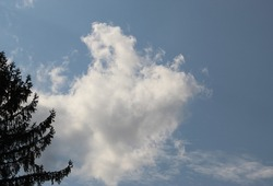 A grayish blue sky with a white billowy cloud and tree branches along side.