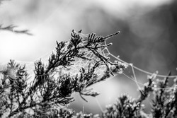 A grayscale selective focus shot of a spiderweb on a plant