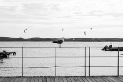 A grayscale shot of a lonely seagull standing on a metal railing at the beach, looking at flying birds over the sea
