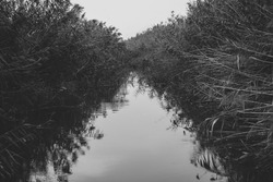 A grayscale shot of a river surrounded by grass in the evening