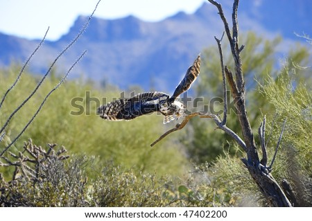 A great horned owl taking flight from a branch