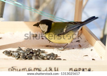 A great tit with a sunflower seed in its beak, Surgut, the Sayma Park, Western Siberia. The inscription below done by hand in Russian means 'for park dwellers/inhabitants'. Stok fotoğraf ©