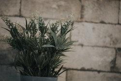 A gree plant in a pot on a wall shelf