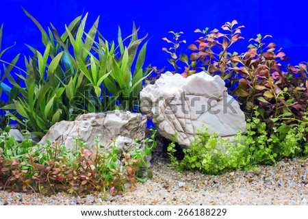 A green beautiful planted tropical freshwater aquarium.