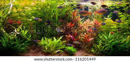 A green beautiful planted tropical freshwater aquarium with fishes - stock photo