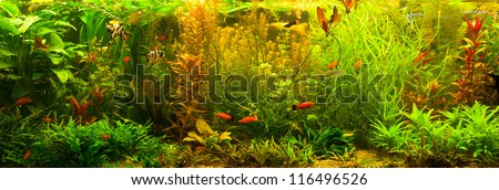 A green beautiful planted tropical freshwater aquarium with fishes