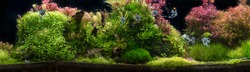 A green beautiful planted tropical view of freshwater aquarium with tropical fish, such as angel fish, discus and tetra, colored cinchlids, aquatic plants, fishnative to amazon river basin