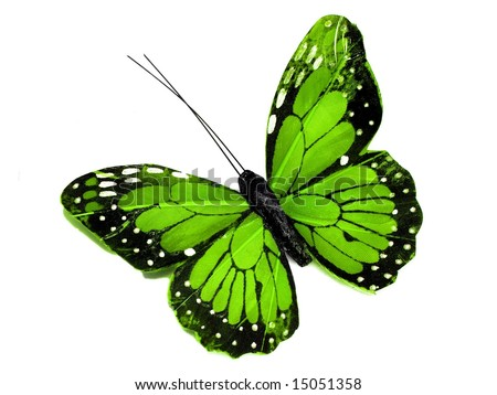 A green butterfly isolated on white