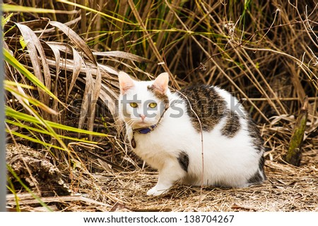 A green eyed cat wearing a collar on the edge of a wetland marsh or meadow