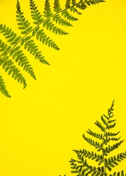 A Green Fern Branch On A yellow Background. Macro Photography Patterns Of Shadows Of Green Fern Leaves With A Space For Text. yellow background with tropical green fern leaves. Space for the text.