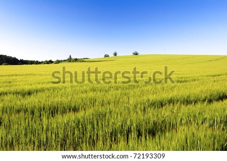 A green field in spring on a sunny day