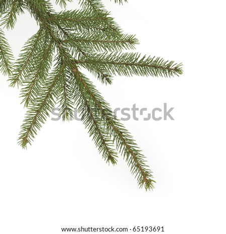 A Green fir tree branch is haning from top left into the image