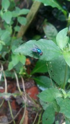 a green fly perched on a weed leaf in the backyard