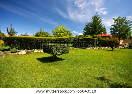 A green hedge - garden - Slovakia, Europe