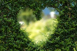 a green hedge with a hole in form of a heart