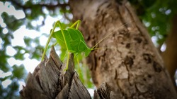 A green insect on the tree trunk