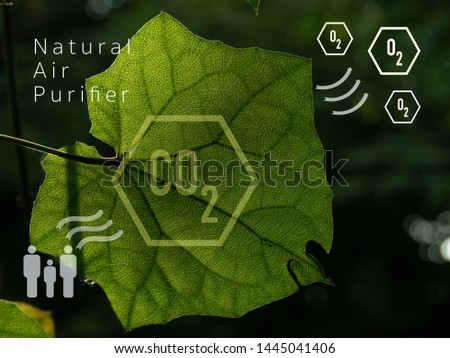 A green leaf with graphic Natural Air Purifier and symbol of Oxygen, Human and Carbon dioxide which means tree is the best air purifier and most of all, it's free. Stock photo ©