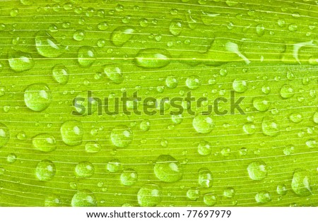 a green leaves with rain droplets