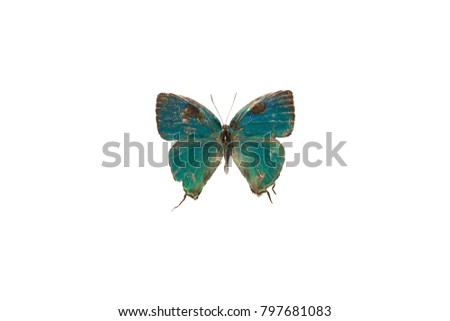 A green lycaenid butterfly from French Guiana isolated on white background #797681083