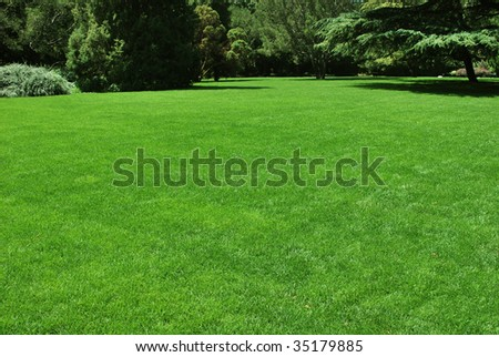 A green meadow in a park, ideal place for rest and party.