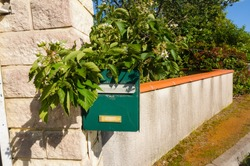 A green metal mailbox at the French standard postal format, mounted on a stone pillar against a stucco wall that encloses a garden, with green branches of a mulberry tree growing onto the box