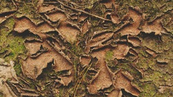 A green moss dry peeling on wall and floor, texture background