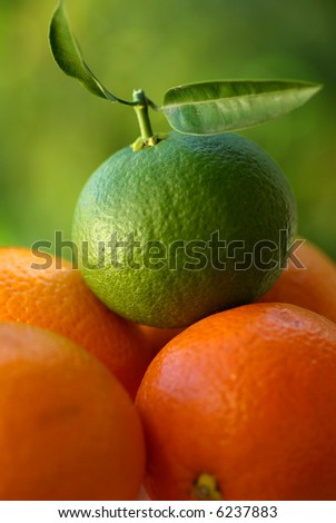 A green orange and other mature oranges.