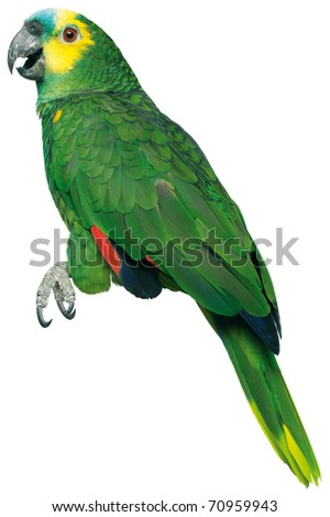 a green parrott on a white background