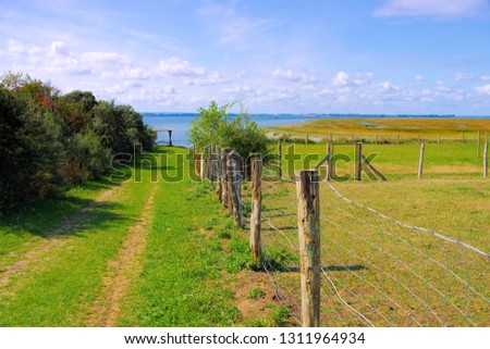 a green pasture on the island of Poel in northern Germany #1311964934
