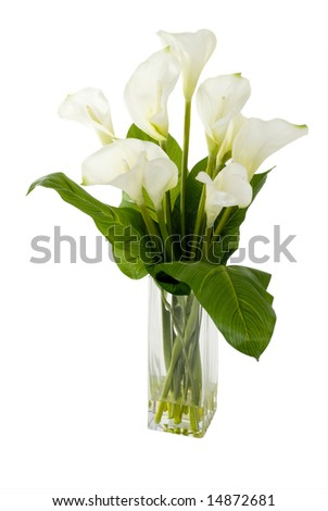 A green plant in a vase on an isolated background. - stock photo