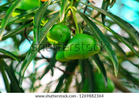 A green plant producing fruits #1269882364