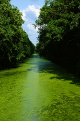 A greenish river water flows through the forest.