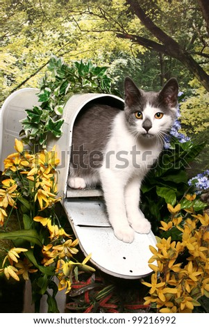 A grey and white tabby kitten stands in an open mailbox in a woodland garden