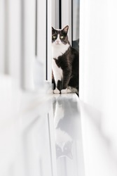 A grey cat with yellow eyes is sitting near the window,  behind the white curtains
