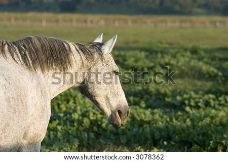 Markings On A Horse. hot markings on horse. the markings on horse. markings on horse. stock photo