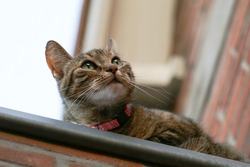 A Grey tabby cat sitting on a roof seen from below