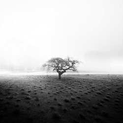 A greyscale shot of a lonely tree growing in a field