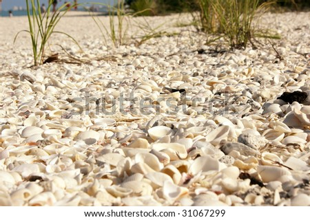 A ground level view of the sea shell covered Bonita Beach in Bonita Springs, Florida. Close up detailed shot showing the shell covered ground with grass growing.