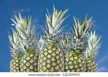 A group arrangement of pineapples against a blue sky.