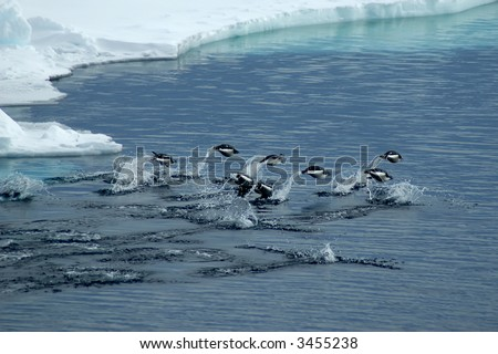 A group of adelie penguins jumping over darkblue antarctic waters