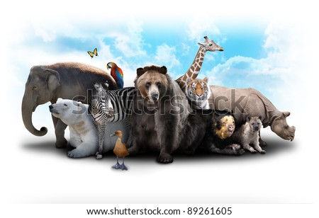 A group of animals are grouped together on a white background. Animals range from an elephant, zebra, bear and rhino. Use it for a zoo or friends concept. - stock photo