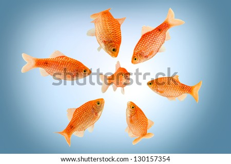 a group of big fish surrounding a small fish