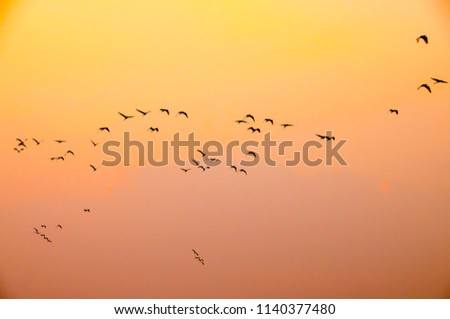 A group of birds on a colorful background #1140377480