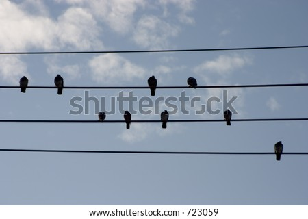A group of birds sits up in the wires.