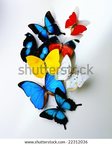 pics of butterflies. A group of butterflies on