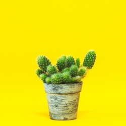 A group of cacti close-up in a vintage pot on a yellow background.